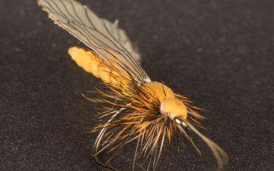Caddis Adult #12 cinnamon brown