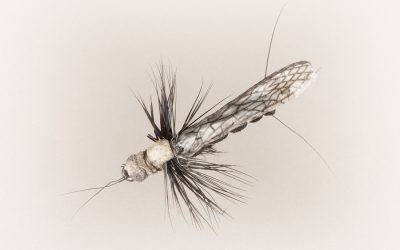 Stonefly Adult #18 black